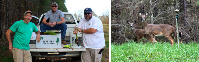 On left, three Land App employees on back of truck with tree seedlings and on right, two deer in Lan